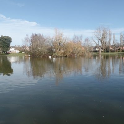 Photo of Hailsham Common Pond in Bellbanks Road