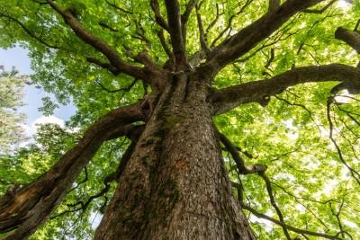 Tree Warden