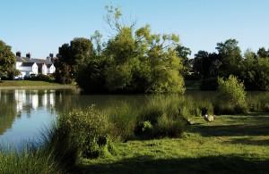 Hailsham Common Pond in Bellbanks Road