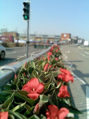 Photo of town centre floral displays