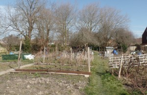 Hailsham Allotments