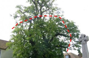 Town centre tree work