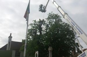 Work being carried out on chestnut tree in Vicarage Field