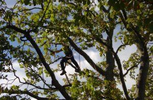 Tree management work