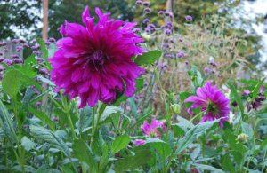 Camberlot Garden Open Day