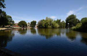 Common Pond